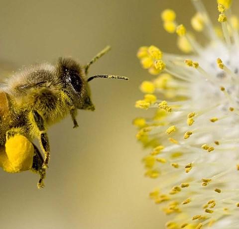 abejas-equilibrio-ecosistema-2-1